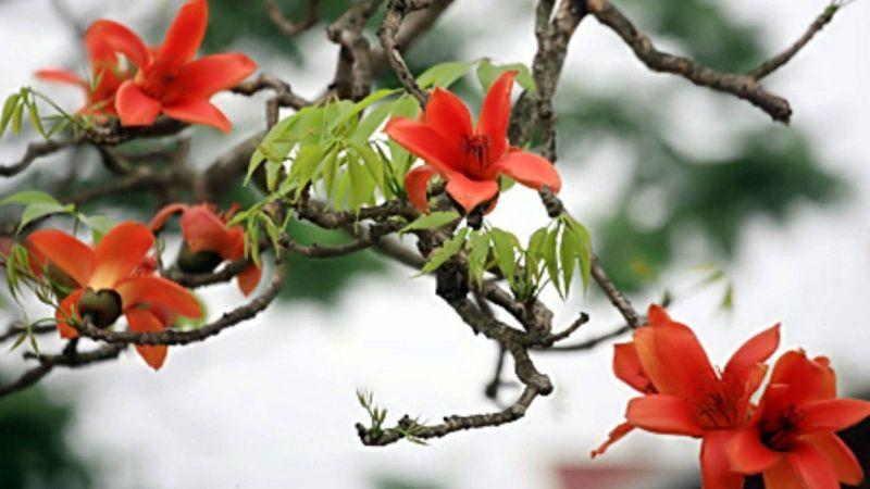 Bài thơ: Sắc Tháng Ba  - Trương Hải Thúy