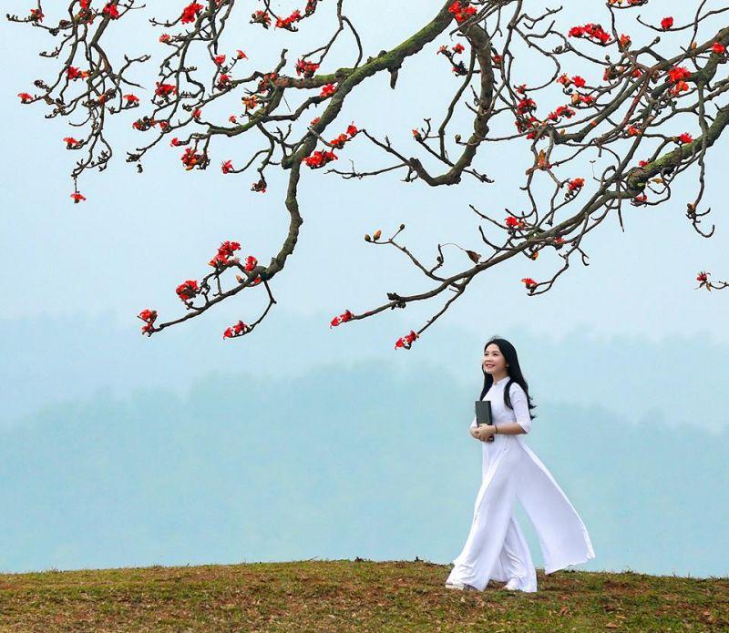 Bài thơ: TỰ KHÚC THÁNG BA - Hoa Diên Vỹ