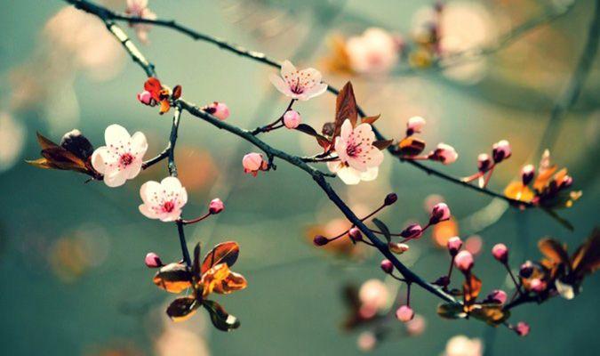 Câu đố vui cho trẻ mầm non về chủ đề mùa xuân