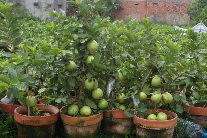 Công ty cổ phần giống cây trồng Miền Nam (SSC)