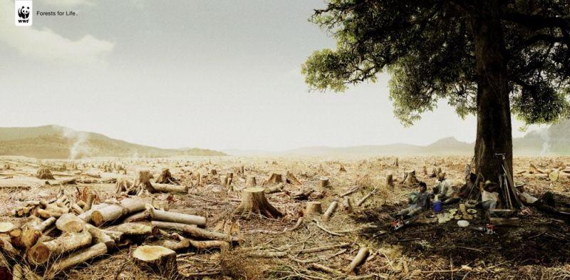 Ô nhiễm môi trường, El Nino và biến đổi khí hậu