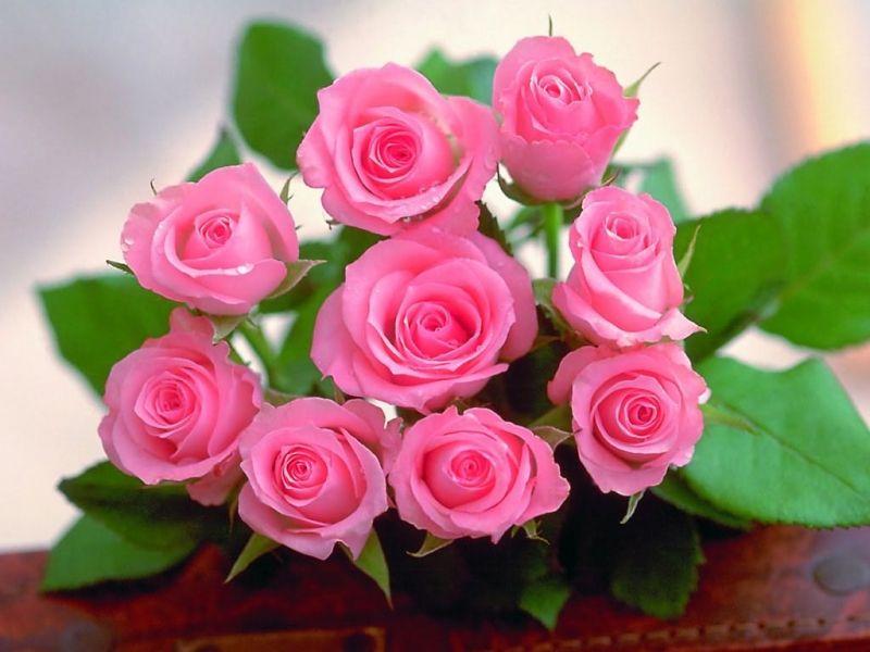 Quy luật tặng hoa hồng trong ngày Valentine