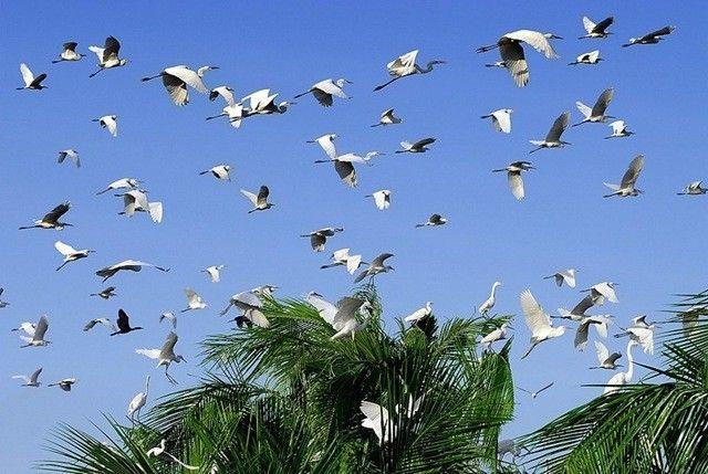 Sân chim Vàm Hồ