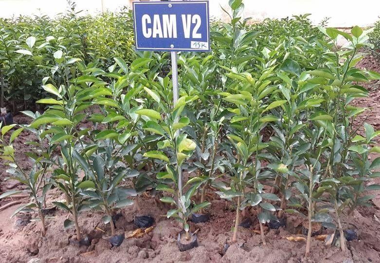 Trại giống cây trồng Tân Chánh Hiệp