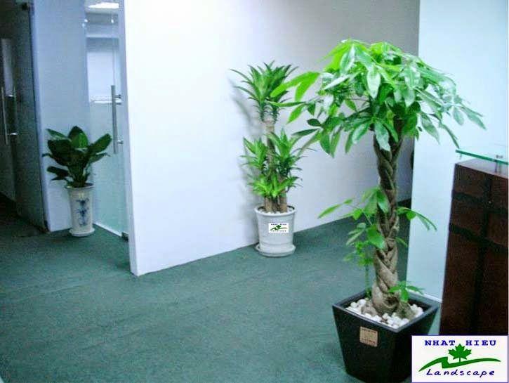 Tuổi Thân - chậu cây xanh
