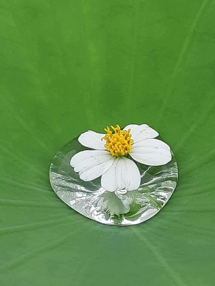 Bài thơ: Sắc màu hoa cúc - Doãn Kim Oanh