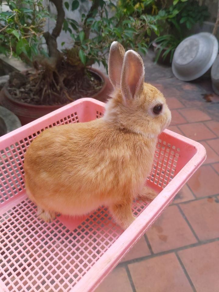 Hamster Vinh
