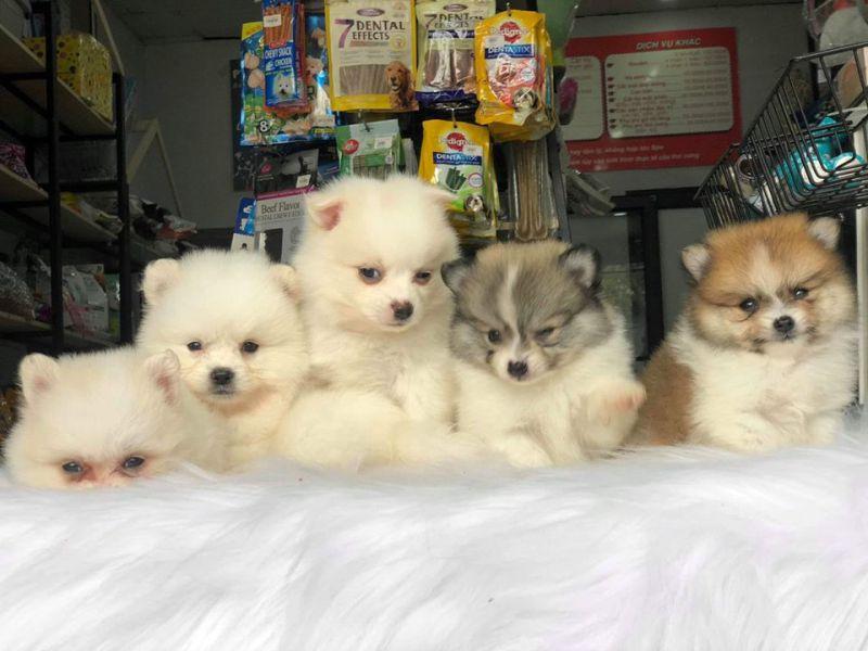 Hoàng Nhè Pet shop
