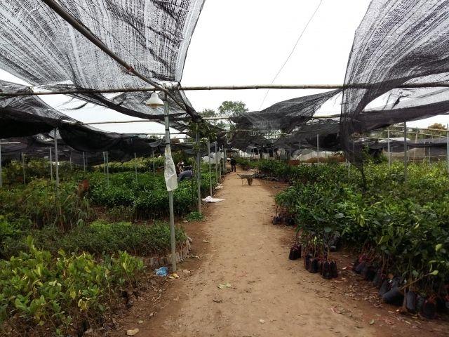 Trung tâm giống cây nông nghiệp - Đại học nông nghiệp 1