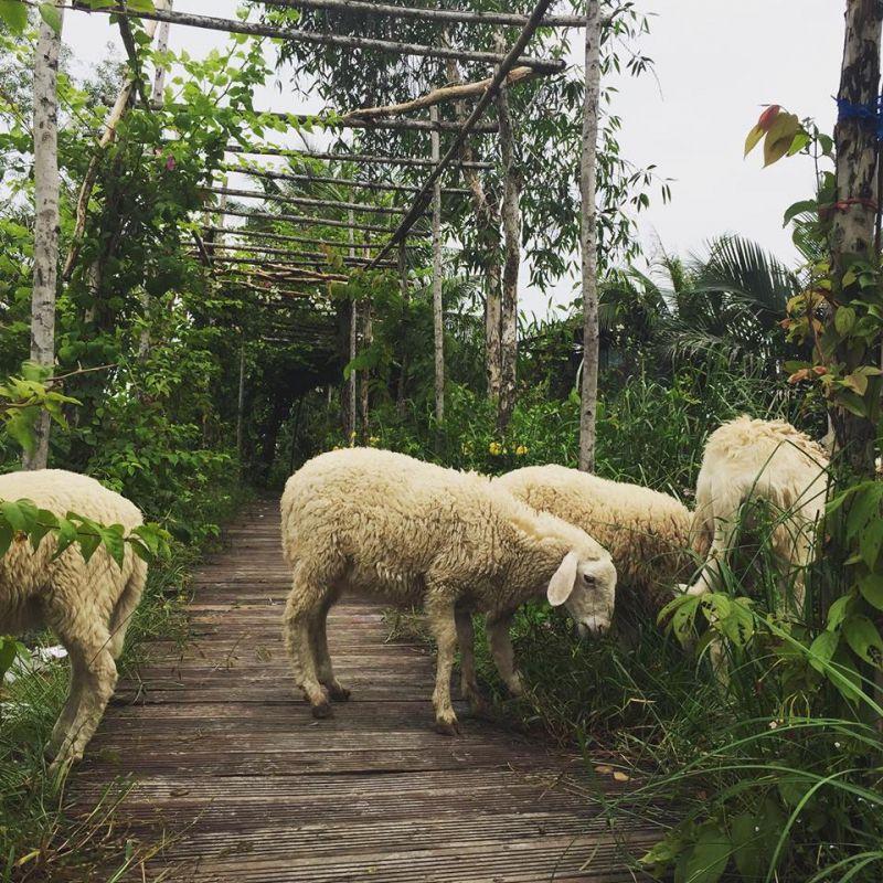 5ku Farm