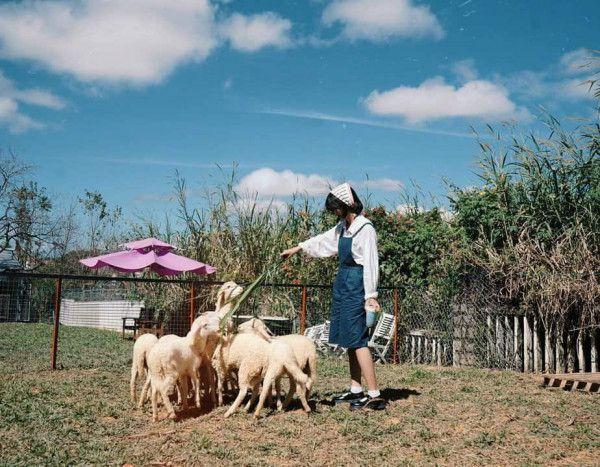 Alaska House – trang trại cừu