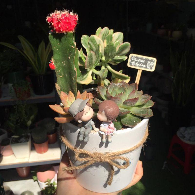 Cây Cảnh Mini Quy Nhơn - Thao's Garden