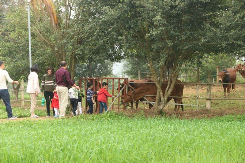 Detrang Farm
