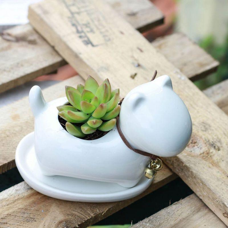 Hoa Sen Đá - TINY Garden