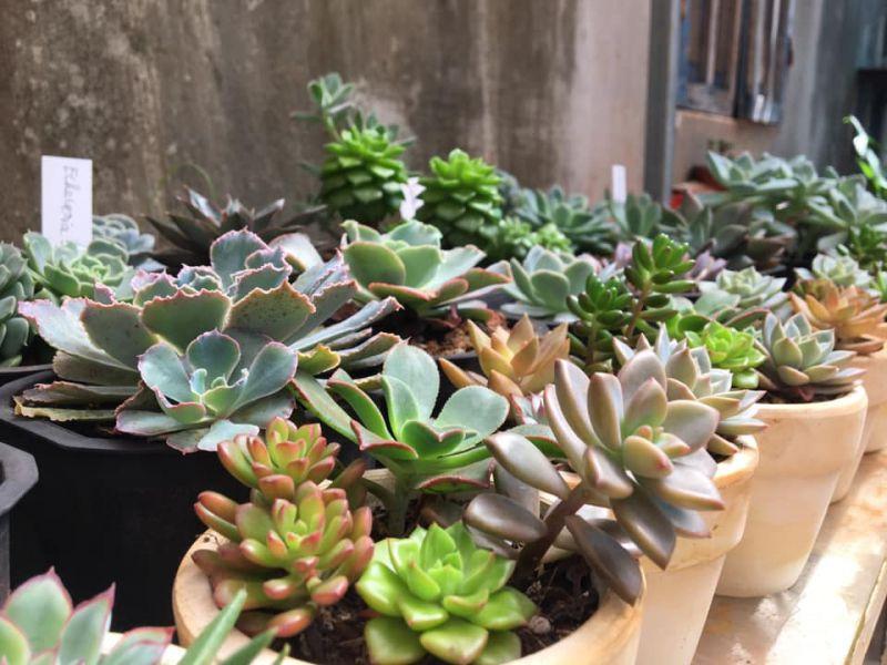 Lá Xanh Garden