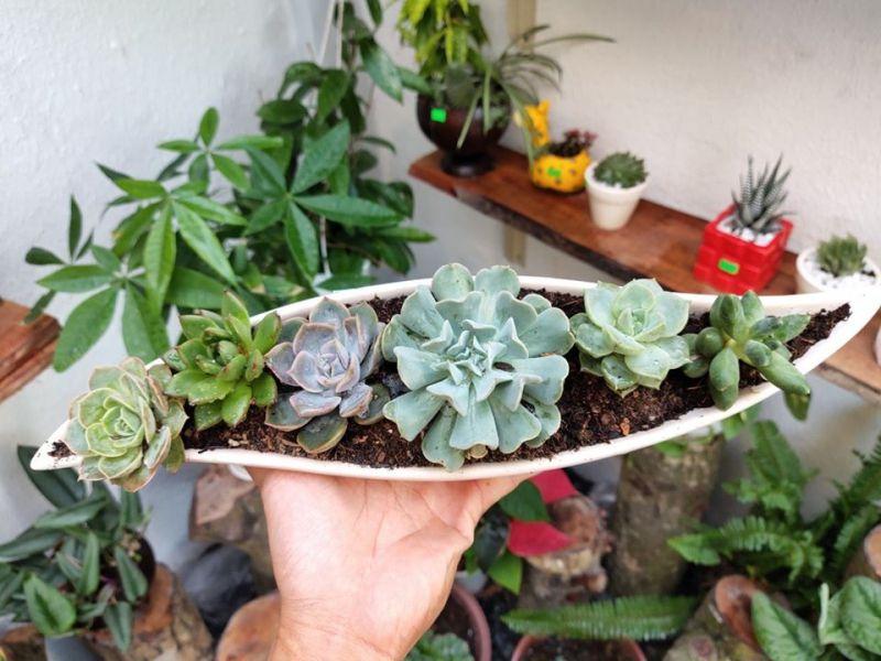 Mộc Garden