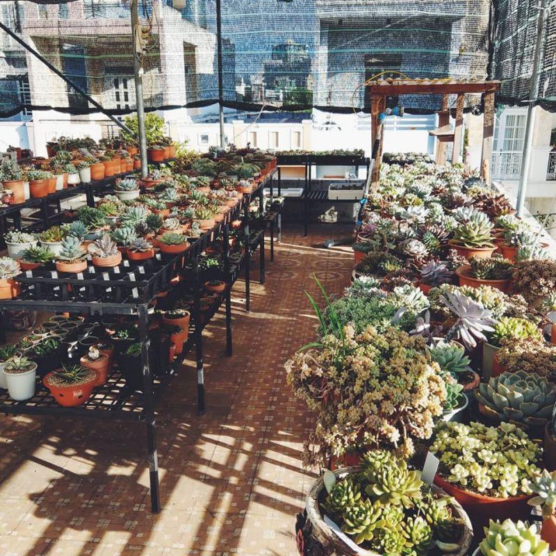 Qi Garden