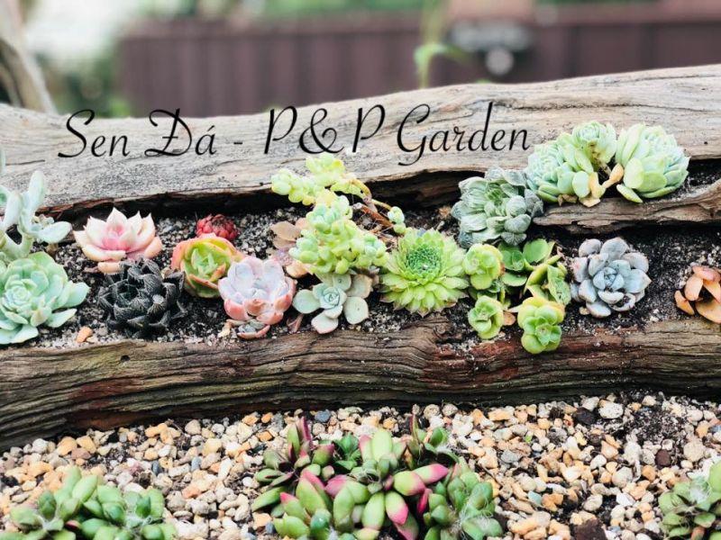 Sen đá - P&P Garden