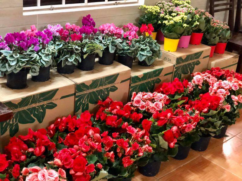 Shop Hoa De Jours