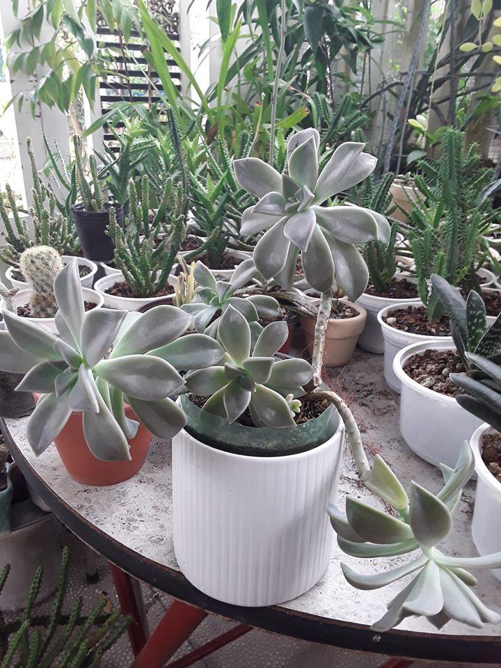 Succulent Garden - Vườn Sen Đá