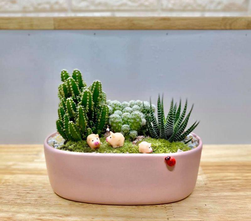 Susu Garden - Cây Cảnh Mini - Cây Xanh & Quà Tặng
