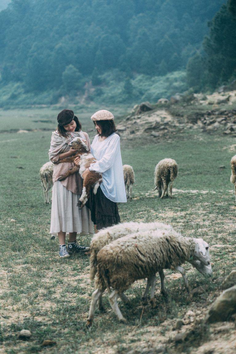 Trại cừu Yên Thành