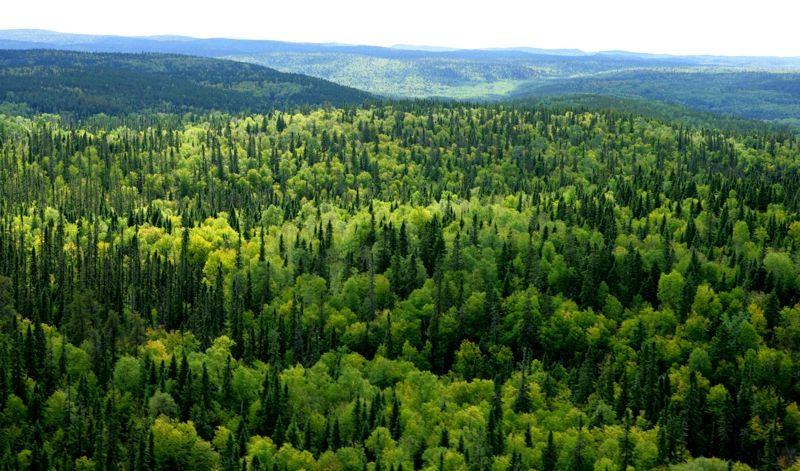 Bài văn phân tích hình tượng rừng xà nu số 4