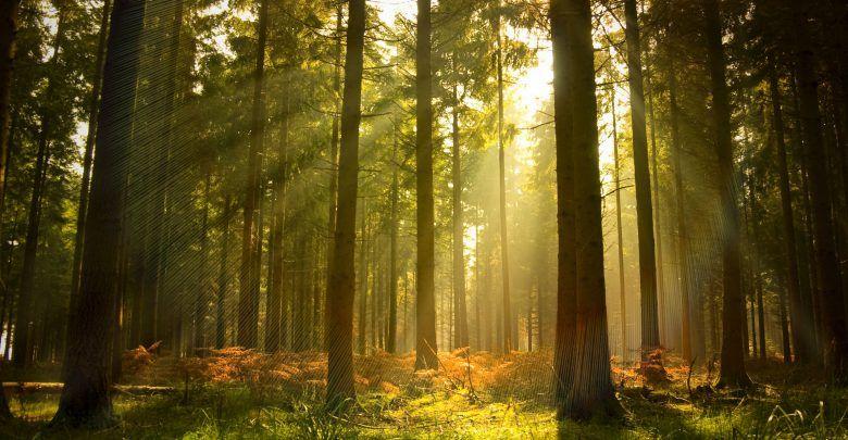 Bài văn phân tích hình tượng rừng xà nu số 9