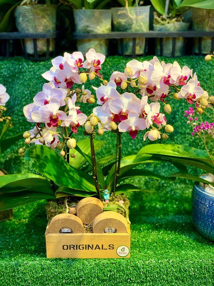 Bao Anh Flowers & Fruits