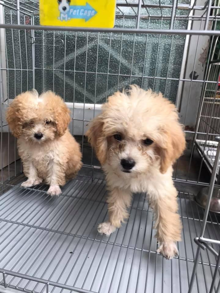 Halo Pet Shop