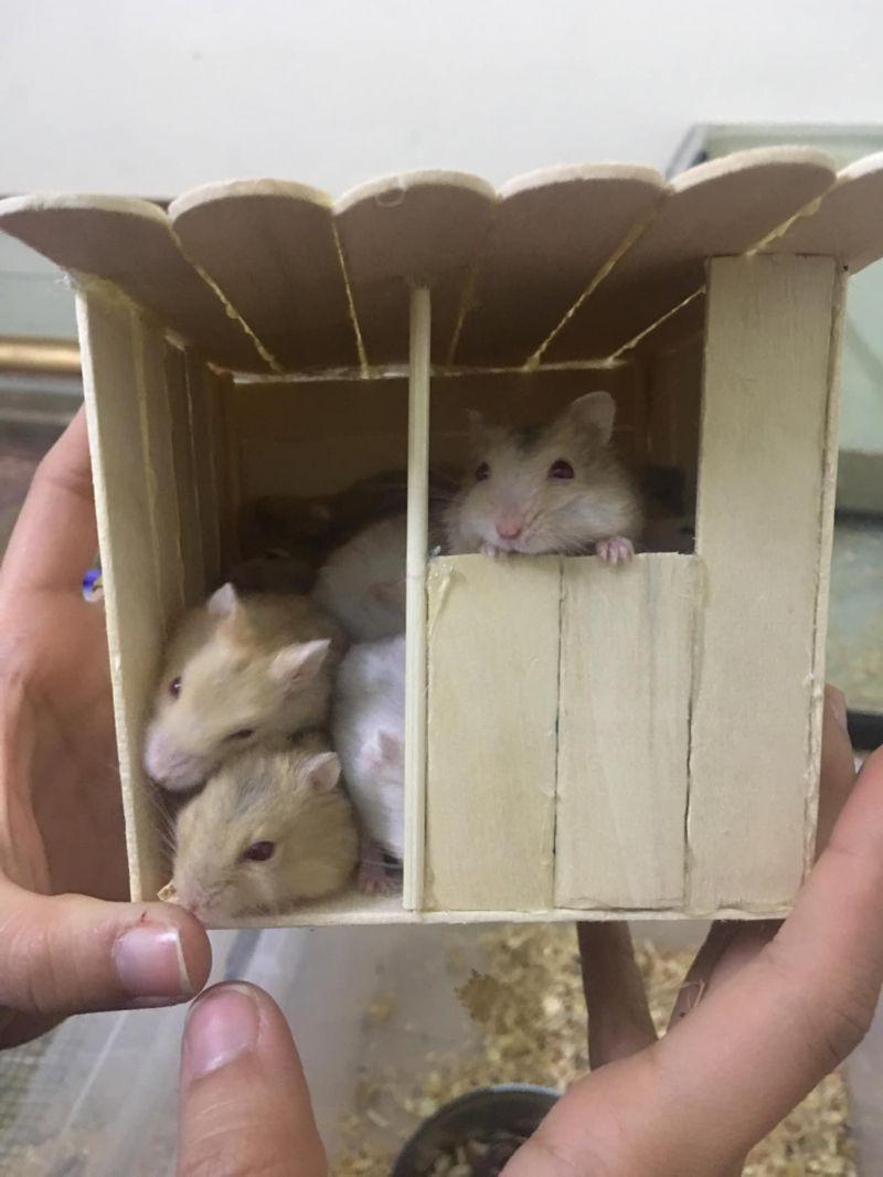 Huyen Me' Hamster Hạ Long