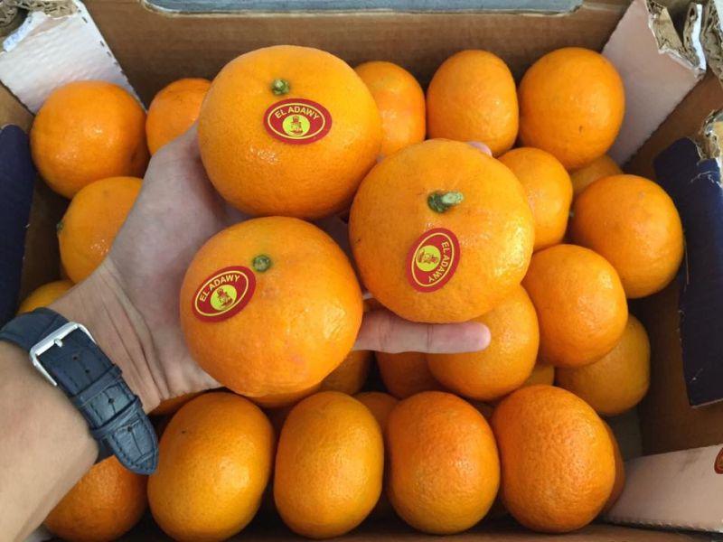 Trái cây nhập khẩu Fresta Vũng Tàu