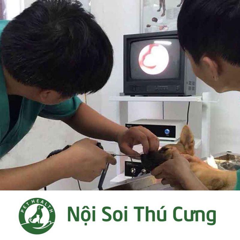 Bệnh viện thú y Pethealth Thanh Hóa