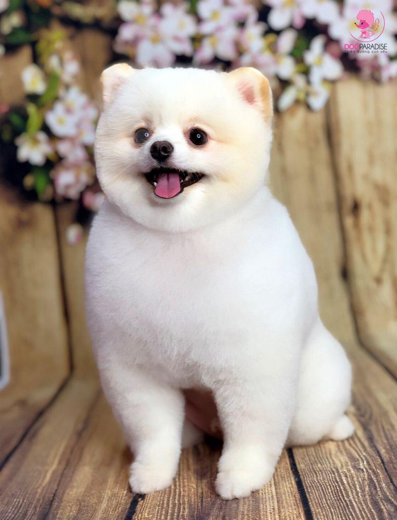 Happy Pet Care