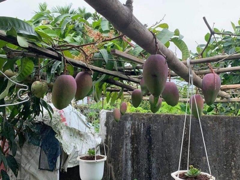 Đại lí phân phối cây giống Huế