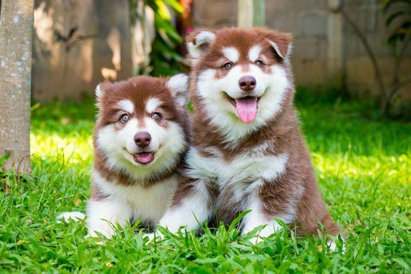 ThiThi Pet Clinic & Pet Shop