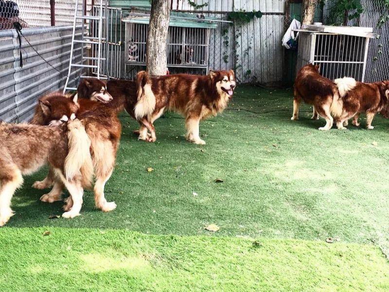 Trại chó Nguyễn Thành Kennels