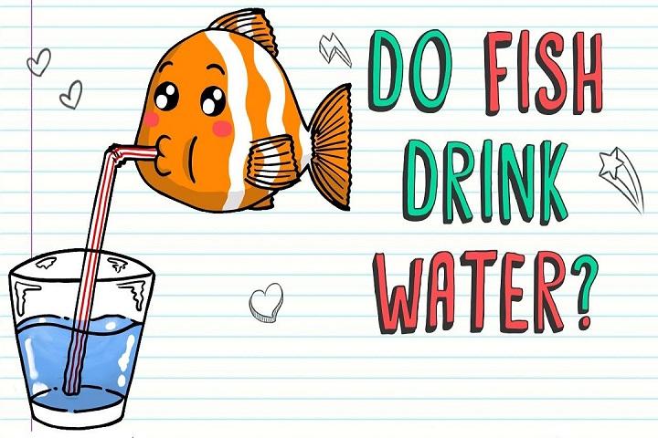 Cá sống dưới nước vậy chúng có bao giờ khát nước không?