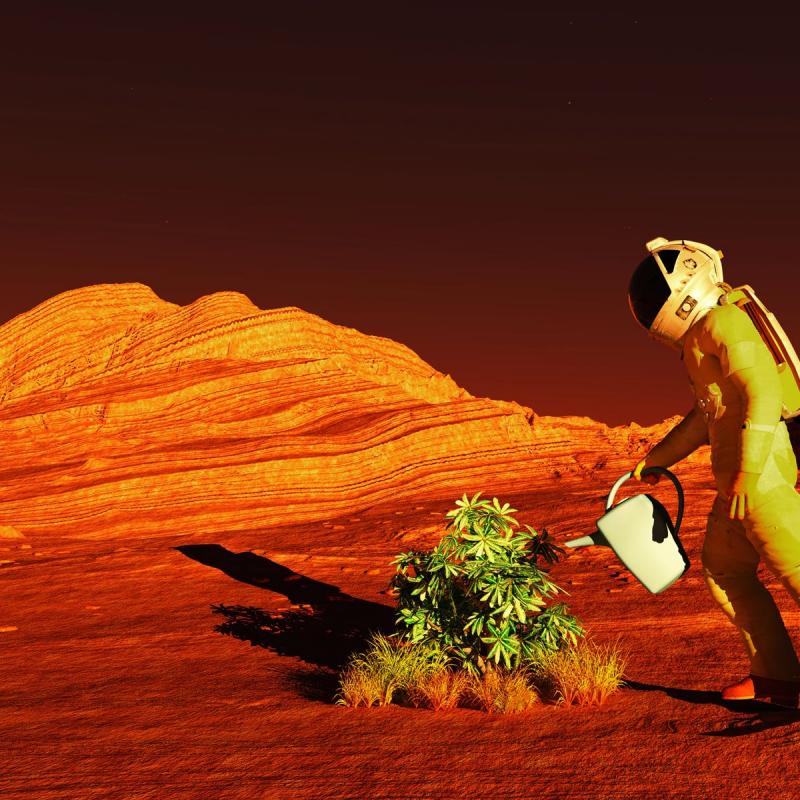 Đất trên Sao Hỏa có thể trồng được cây không?