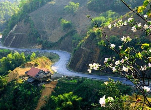 Hoa mận trắng ở Điện Biên