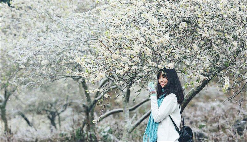 Mộc Châu – Cao nguyên của sắc hoa rực rỡ