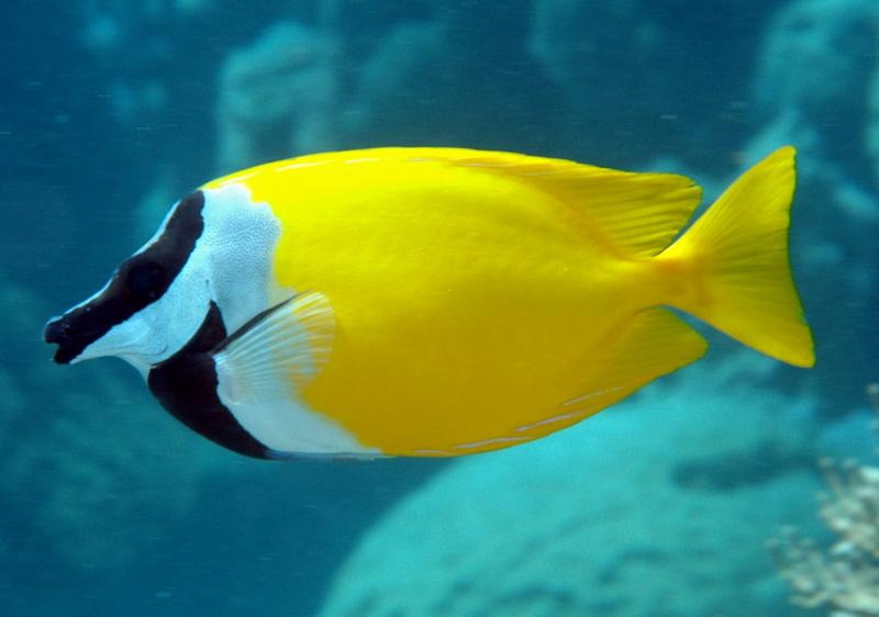 Tại sao nước biển mặn nhưng cá sống trong nước biển khi ăn lại không bị mặn?