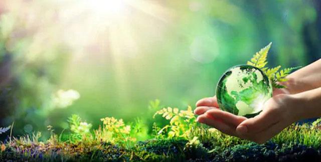 Bài văn chứng minh rằng bảo vệ rừng là bảo vệ cuộc sống của chúng ta số 3