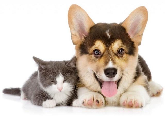 Sản phẩm trị nấm cho chó mèo dạng xịt Davis Chlorhexidine