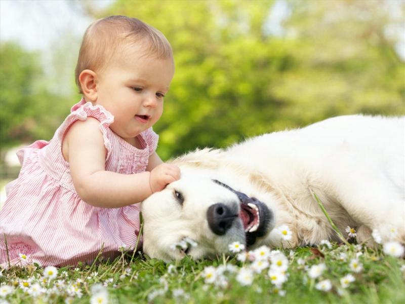 Tại sao con nên yêu thương vật nuôi trong nhà