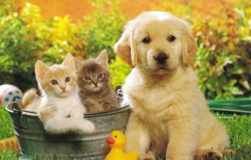 Tại sao thú cưng không sống lâu được như chúng ta?