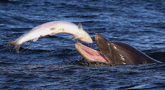 Thức ăn của cá heo là gì?