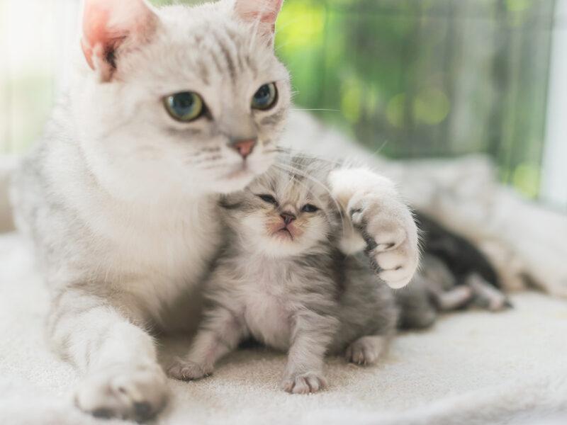 Men vi sinh BIO BACIMAX cho chó mèo