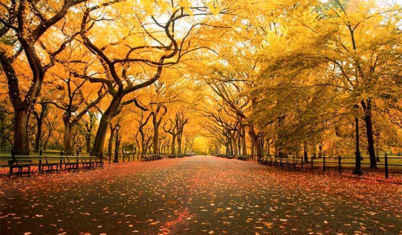 Mùa thu thực sự là như thế nào?