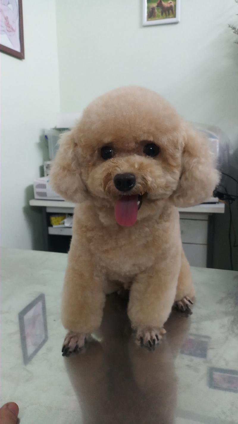 Phòng Khám Thú Ý Golden PET